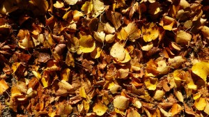 leaves on roof, clean gutters